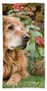 Comanche Autumn - Golden Retriever - Casper Wyoming Beach Towel
