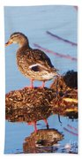 Comedian Duck Beach Towel