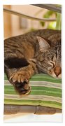Comfy Kitty Beach Towel
