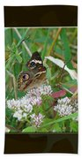 Common Buckeye Butterfly - Junonia Coenia Beach Towel