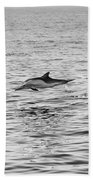Common Dolphins Leaping. Beach Towel