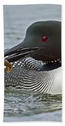 Common Loon With Food Beach Towel