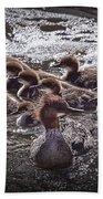 Common Merganser With Chicks Beach Towel