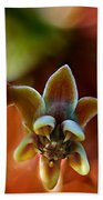 Common Milkweed Beach Towel