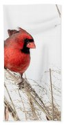 Common Northern Cardinal Square Beach Towel