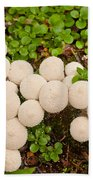 Common Puffball Mushrooms Lycoperdon Perlatum Beach Towel