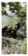 Common Raven Feeding Young In Nest Beach Towel