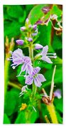 Common Speedwell On Skyline Trail In Cape Breton Highlands National Park-nova Scotia  Beach Towel