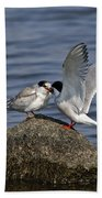 Common Tern Pictures 48 Beach Towel