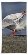 Common Tern Pictures 51 Beach Towel