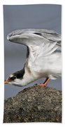 Common Tern Pictures 67 Beach Towel
