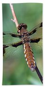 Common White-tail Dragonfly Beach Towel
