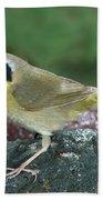 Common Yellowthroat Geothlypis Trichas Beach Towel