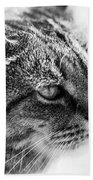 Concentrating Cat Beach Towel