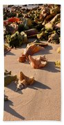 Conch Collection Beach Towel