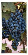 Concord Grapes Beach Towel