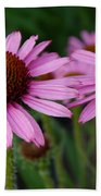 Coneflowers - Echinacea Purpurea Beach Towel
