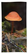 Conical Wax Cap Mushroom Beach Sheet