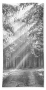Coniferous Forest In Early Morning Beach Towel
