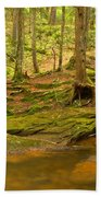 Cook Forest Rocks And Roots Beach Towel