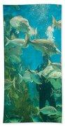 Cool Aquarium Beach Towel by Ray Warren