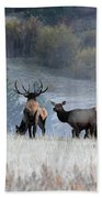 Cool Misty Morning Beach Towel