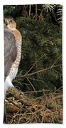 Coopers Hawk In Predator Mode Beach Towel