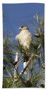 Coopers Hawk In Tree Beach Towel