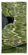 Coot Calling Beach Towel