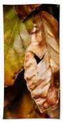Copper Beech Leaves Beach Towel