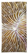 Coral Closeup Beach Towel