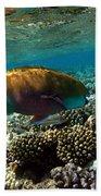 Coral Cruiser Beach Towel