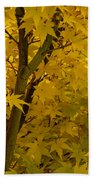 Coral Maple Fall Color Beach Towel