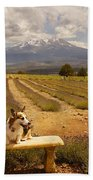 Corgi And Mt Shasta Beach Towel