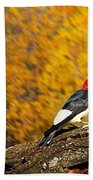 Corn Fed Woodpecker Beach Towel