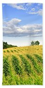 Corn Field Beach Towel by Elena Elisseeva