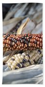 Corn Of Many Colors Beach Towel by Caitlyn  Grasso