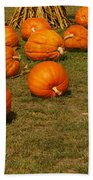 Corn Plants With Pumpkins In A Field Beach Towel