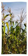 Corn Production Beach Towel