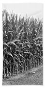 Cornfield Black And White Beach Towel