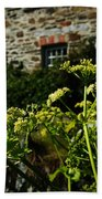 Cornish Cow Parsley  Beach Towel