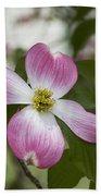 Cornus Florida - Pink Dogwood Blossoms Beach Towel