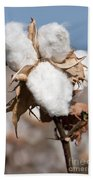 Cotton Bolls  Beach Towel