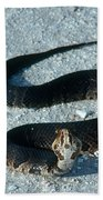 Cottonmouth Threat Display Beach Towel