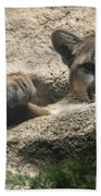 Cougar Spotted Me Beach Towel