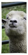 Counting Sheep Beach Towel
