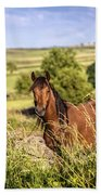 Countryside Horse Beach Towel