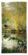 Cow By The Pond Beach Towel