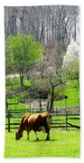 Cow Grazing In Pasture In Spring Beach Towel