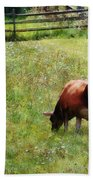 Cow Grazing In Pasture Beach Towel